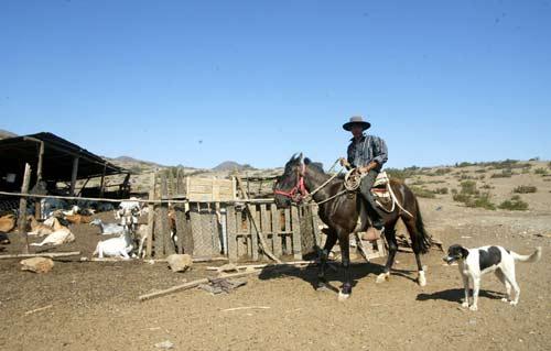 La compleja situación de los crianceros del Huasco en medio de la crisis social
