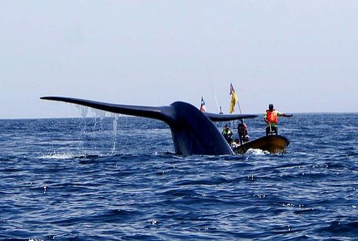 Parte la temporada de avistamiento de ballenas en Chañaral de Aceituno