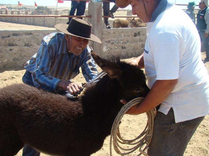 SAG busca determinar condición sanitaria de burros de Carrizalillo