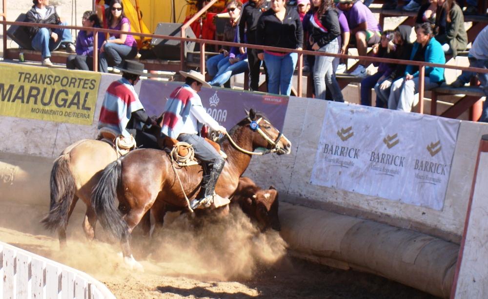 Colleras de Coquimbo se llevaron todos los premios en Rodeo en Hacienda Buena Esperanza