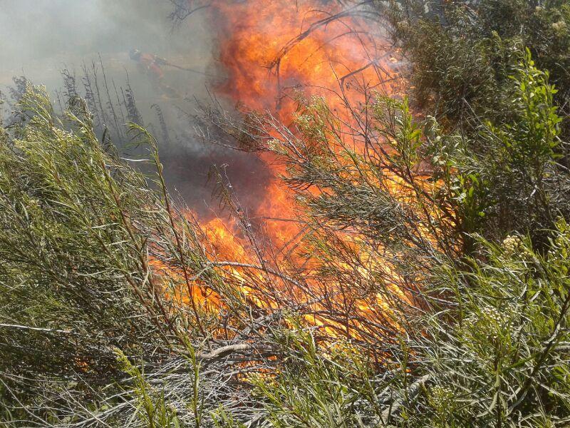 Tras 3 horas de trabajo bomberos logra controlar incendio en Quebrada Honda