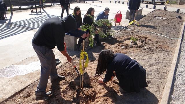 Alianza tripartita permite arborización en sector de Vista Alegre