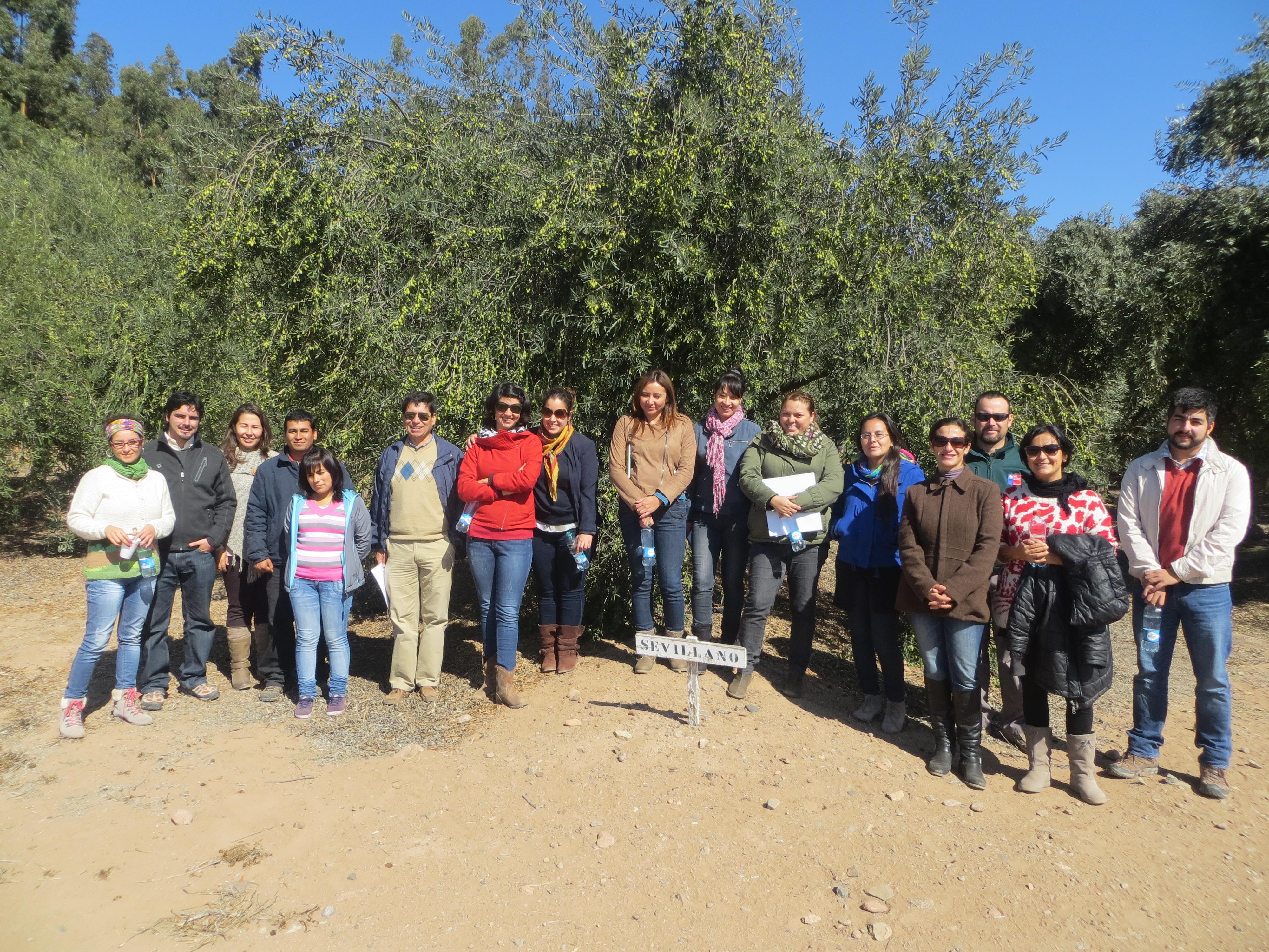 Profesionales reciben capacitación en manejo de cultivo de olivos