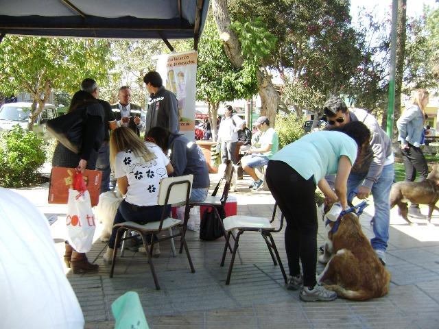 Vallenar se la juega por los perros en Operativo Canino