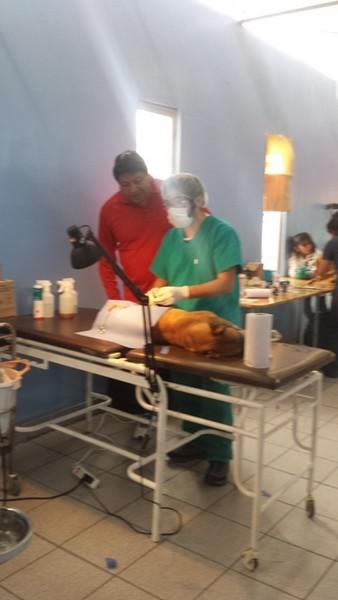 Operativo de Esterilización Baquedano (7)