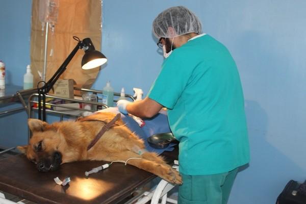 Últimos cupos para Esterilizaciones masivas de Canines y Felinos en Vallenar