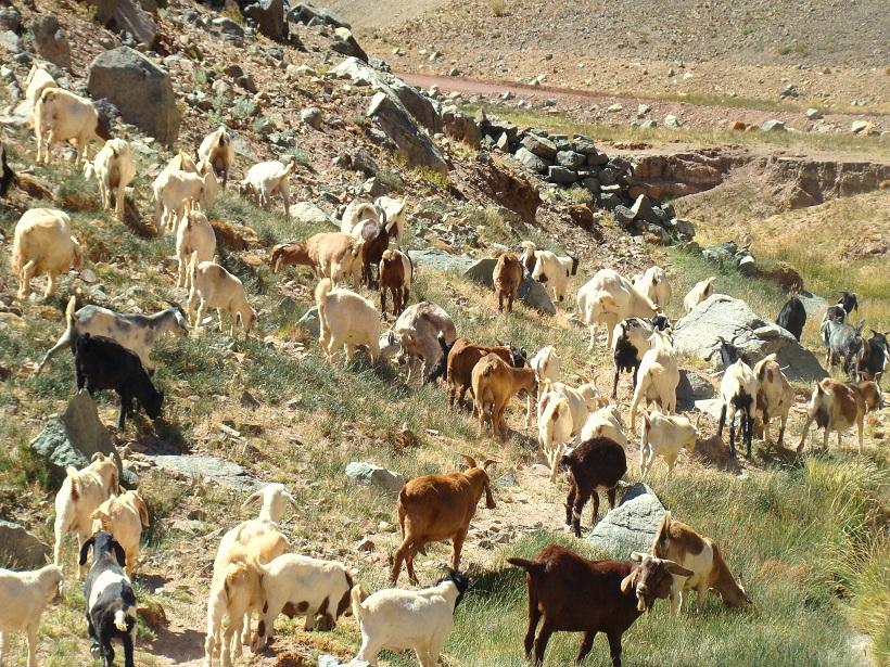 SAG llama inscribir especies animales en Atacama