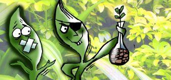 Alstromelia, Biopiratería y saqueo ambiental