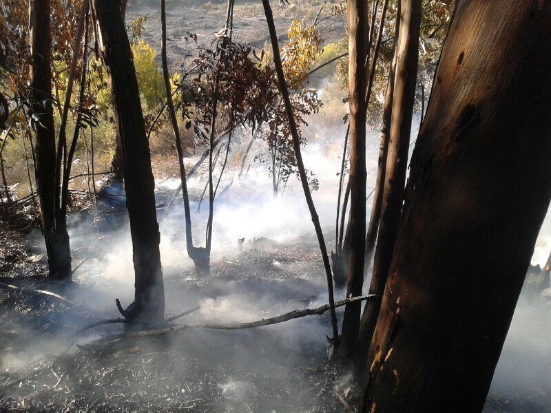 Por 7 horas se extiende incendio en sector Quebrada Honda de Vallenar