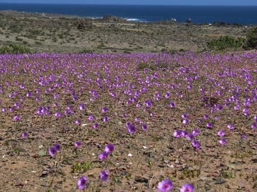 Entregan recomendaciones para cuidar el Desierto Florido