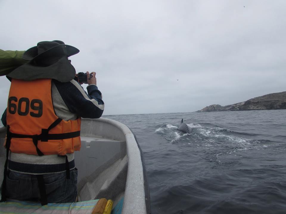 Este viernes comienza temporada de avistamiento de cetáceos en Chañaral de Aceituno