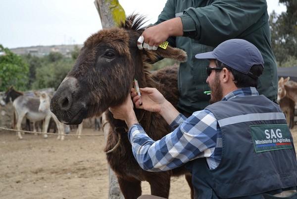 control burros (1)
