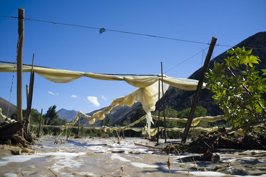 Provoste (DC) advierte grave deterioro en la agricultura de Atacama