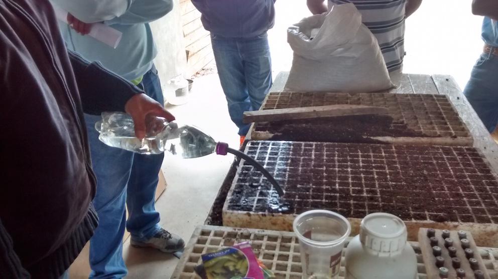 Incentivan uso de almácigos en contendedores para hor-taliceros de Vallenar