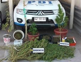 PDI detiene a dos sujetos que cultivaban 12 mil dosis de marihuana en Vallenar