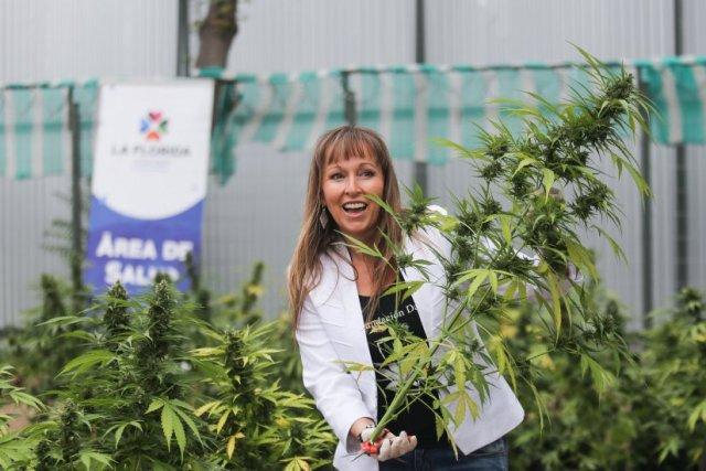 Realizarán 1er Festival de la Cannabis Medicinal de la zona