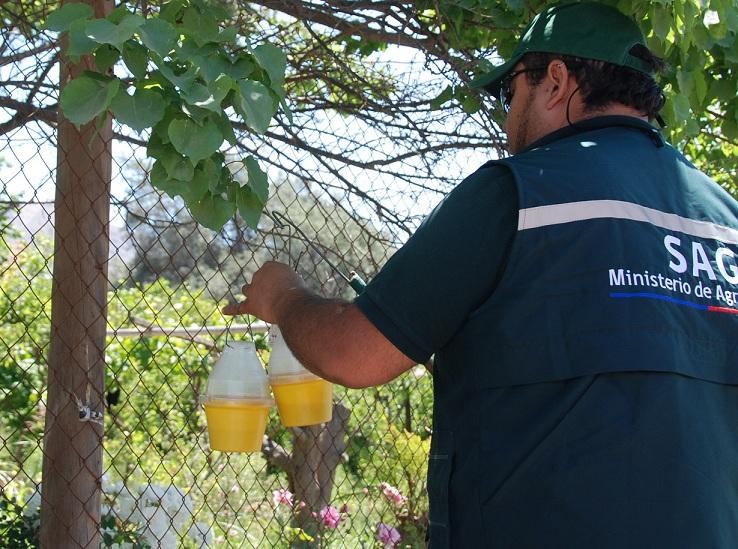 Revisan medidas para prevenir ingreso de mosca de la fruta