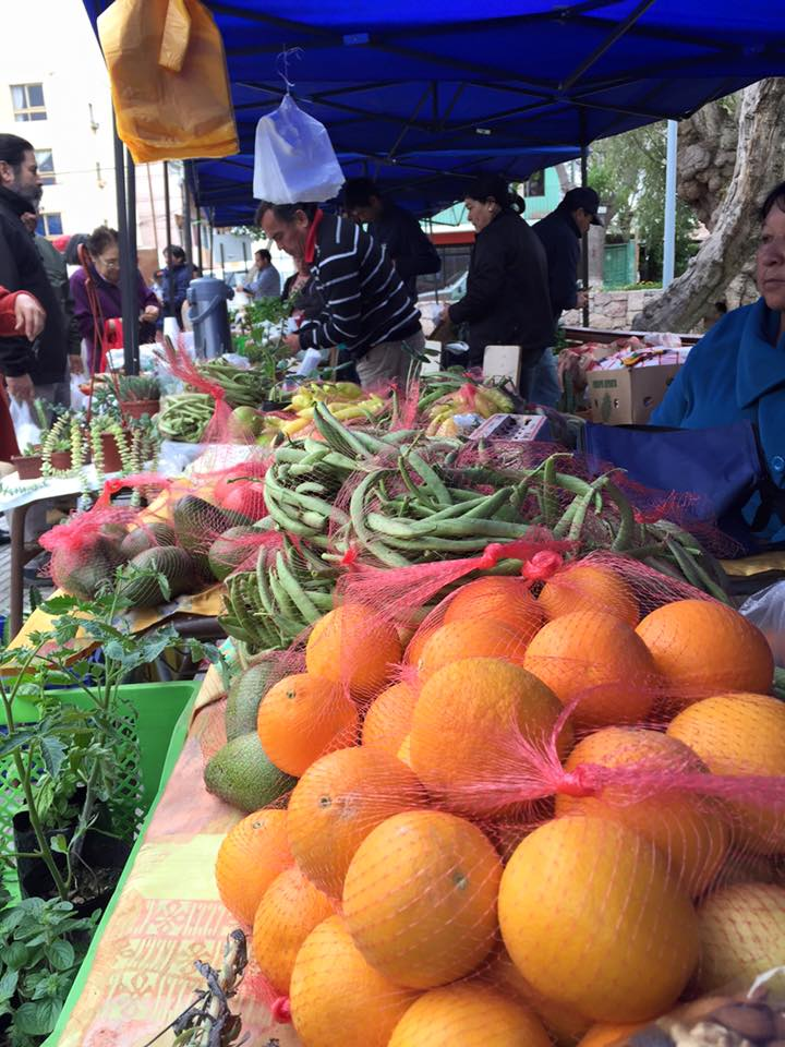 verduras prodesal (1)