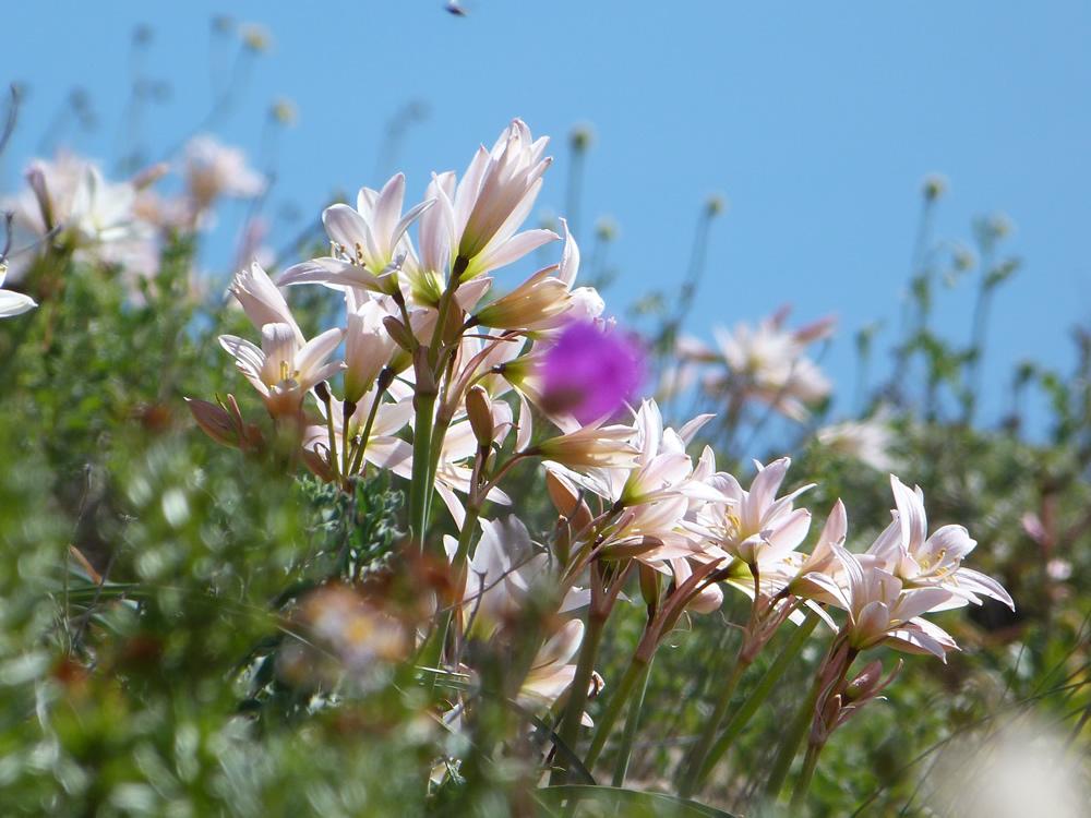 Inician campaña de recolección de firmas para declarar al Desierto Florido como Patrimonio Natural de la Humanidad