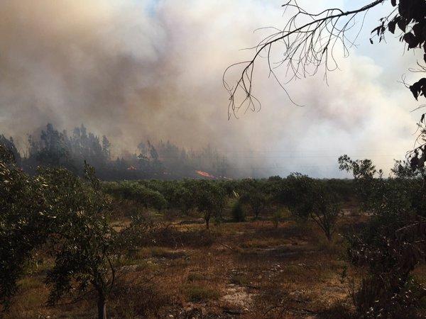 Incendio en Quebrada Honda moviliza a cuatro compañías de bomberos de Vallenar y Freirina