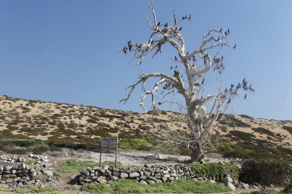 árbol Peña Blanca