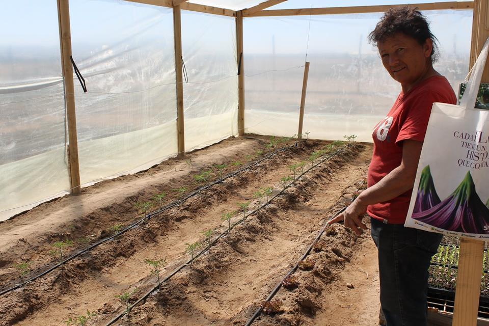 Vecinos de Llanos de Lagarto se certificaron en Manejo y Cultivo de Hortalizas