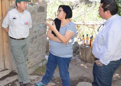 """Enóloga asesora de los pajareteros del valle del Huasco: """"Este es un trabajo permanente, desde la cosecha al embotellado"""
