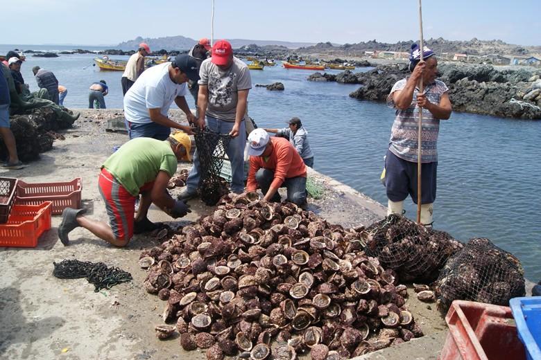 Capitanía de Puerto de Huasco y Sernapesca incautan 74 kilos de locos en veda desde ruco en caleta Los Bronces