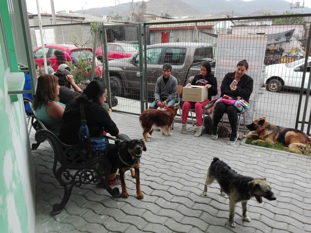 En pleno desarrollo plan de esterilización impulsado por el gobierno en la provincia de Huasco