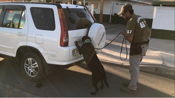 Detector canino de carabineros perimite incautación de 7 kilos de drogas en Vallenar