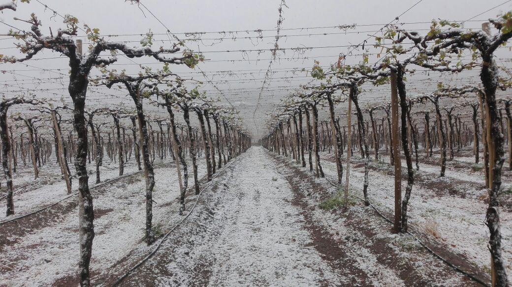 Familia se extravía cuando van a conocer la nieve: Gobierno hace llamado a visitar con precaución