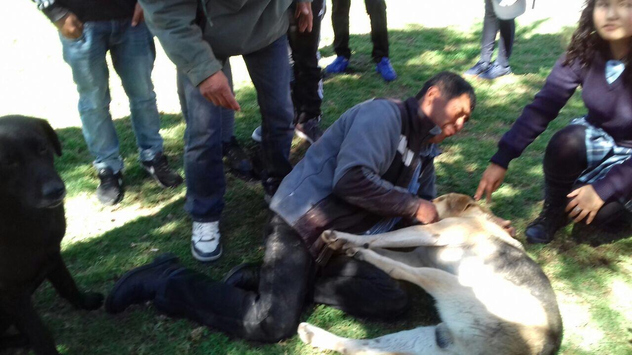 Carabinero disparó a perro que lo mordió en plaza de Vallenar
