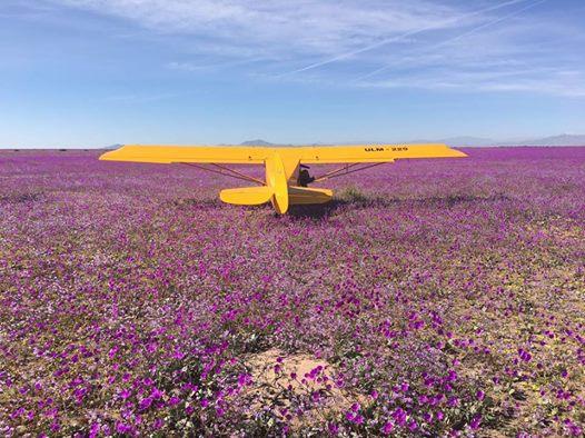 Robles solicita sancionar a personas que aterrizaron avionetas en desierto florido