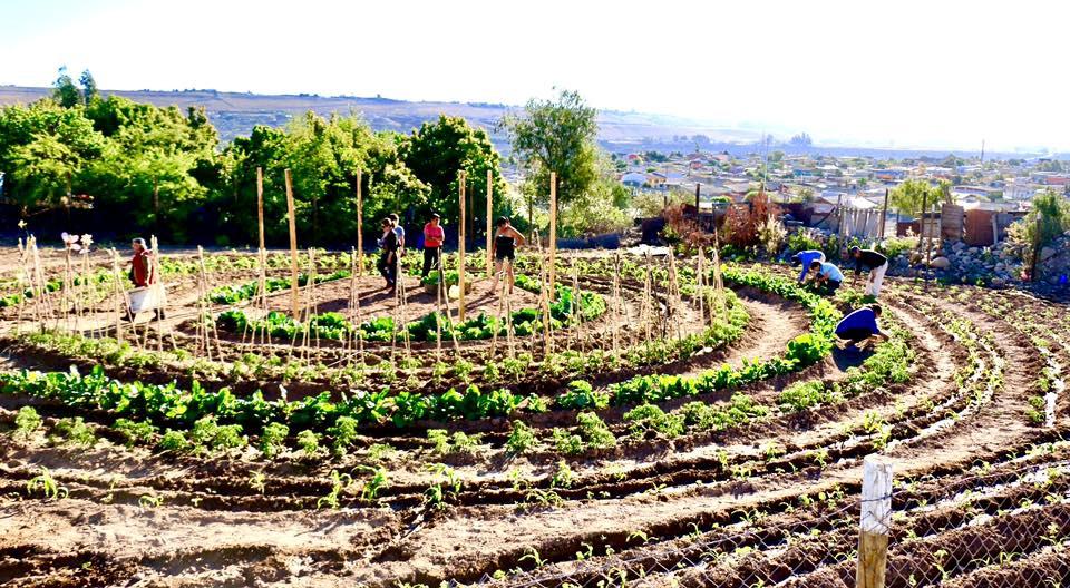El huerto urbano comunitario la espiral asombra a Vallenar
