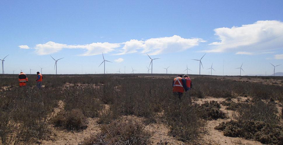Freirina inyecta 478 megawatts al SIC con proyectos eólicos