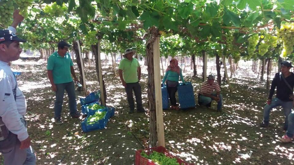 Agricultores de la provincia de Huasco se capacitan en manejo de equipos fitosanitarios