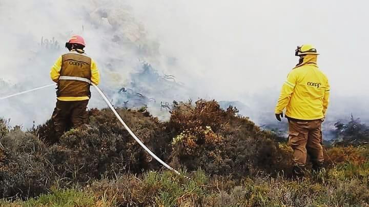 Incendios afectan Vallenar y Carrizal Bajo en una misma jornada