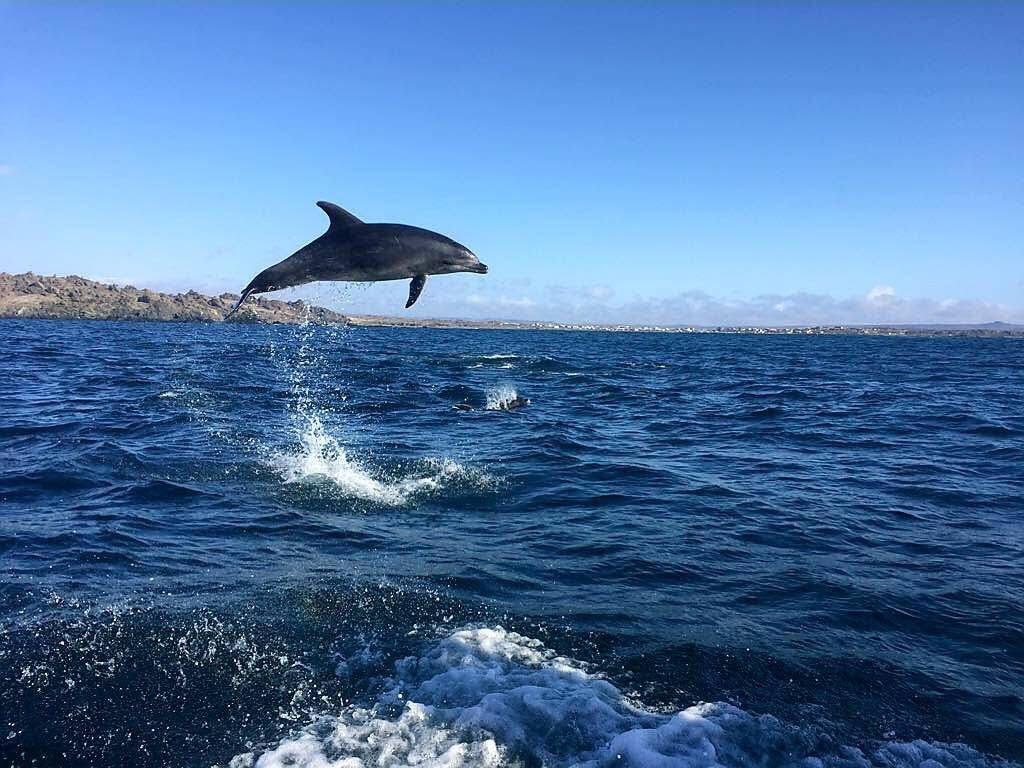 Dan el vamos a la temporada de avistamiento de cetáceos en Chañaral de Aceituno
