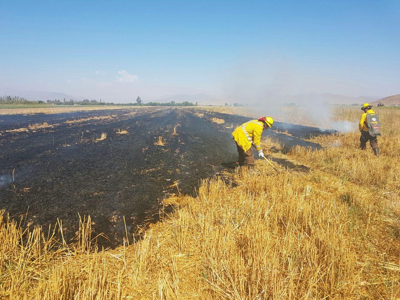 Crearán tercera brigada para incendios forestales en Vallenar