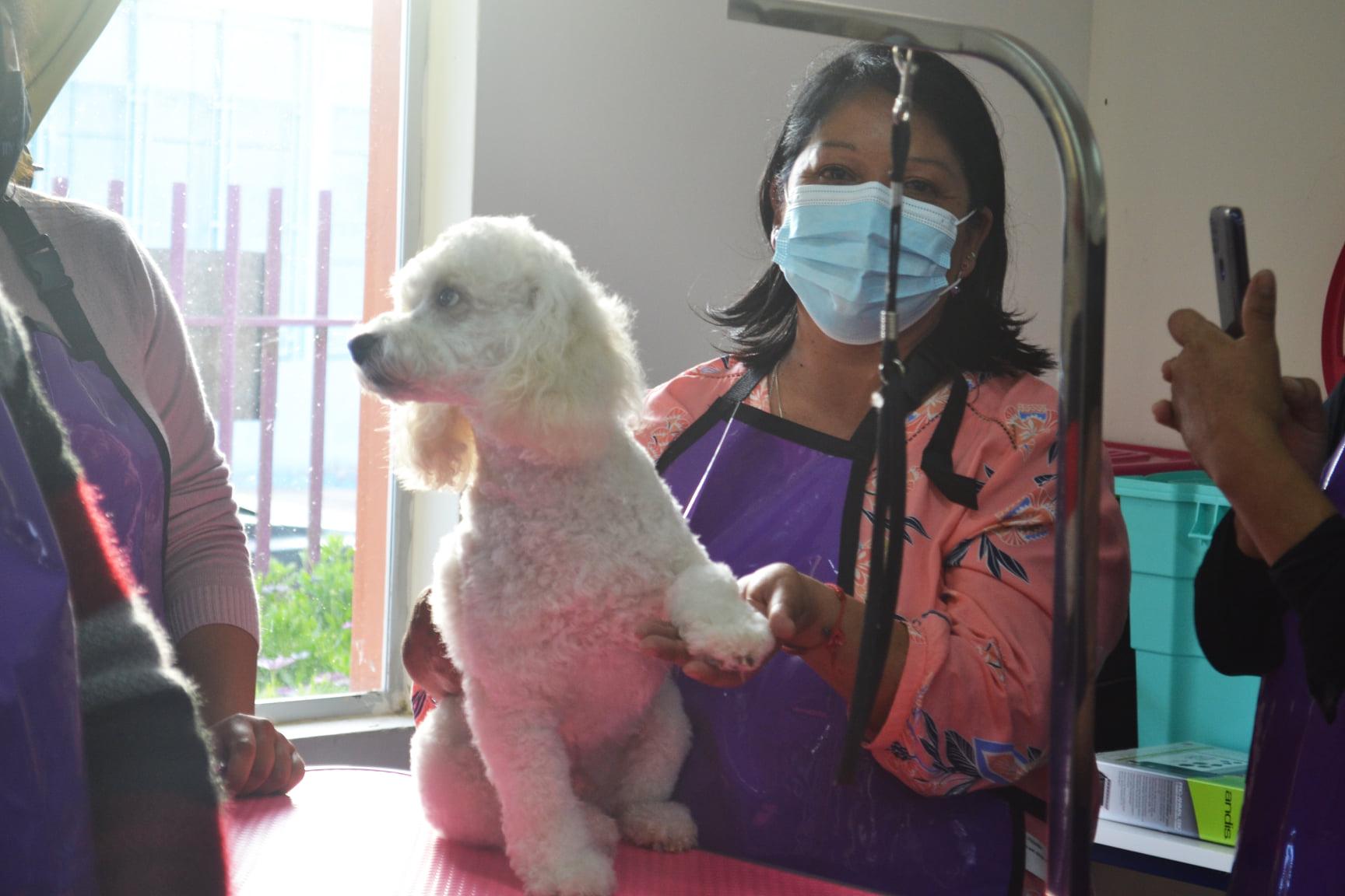 Certifican a mujeres de Freirina con curso de peluquería canina