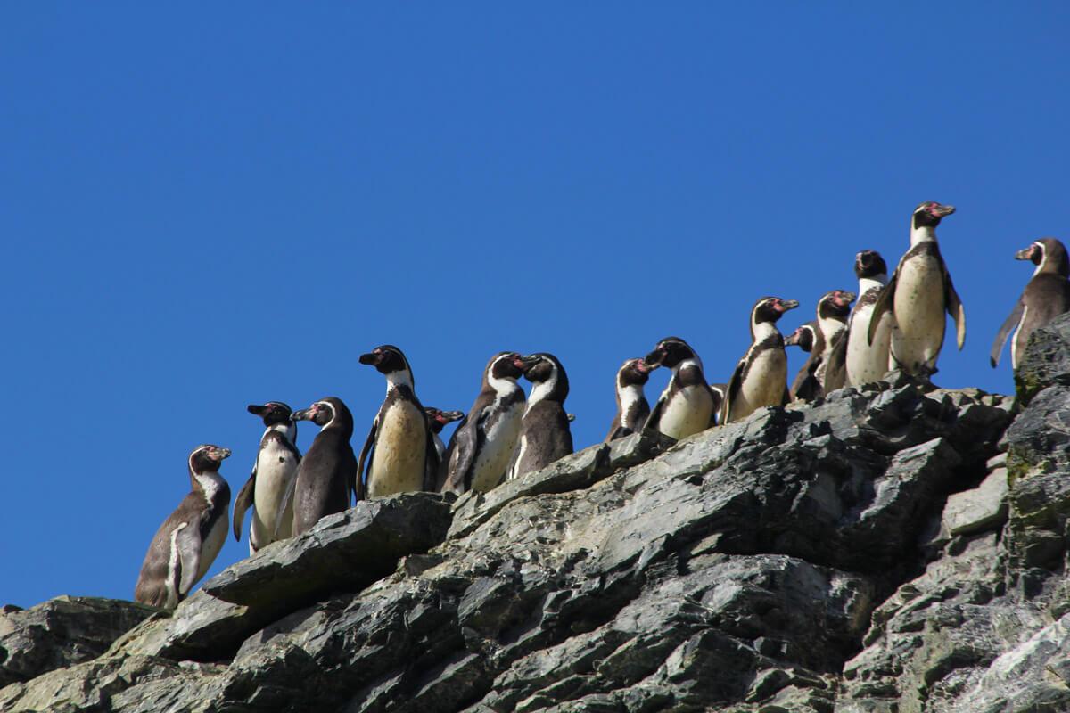 """Académica de la Universidad de Valparaíso Maritza Sepúlveda: """"Si el proyecto Dominga se llega a instalar en la zona va a impactar seriamente la diversidad y la abundancia de las especies"""""""