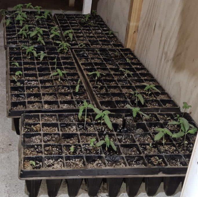 Procedimiento por VIF dejó al descubierto vivienda con plantación de marihuana