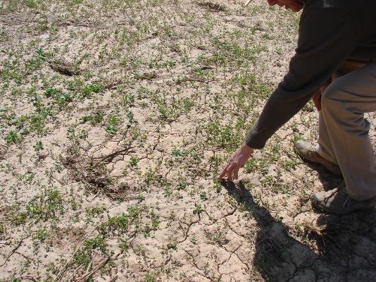 Complicada situación de crianceros ante sequía en valle del Huasco