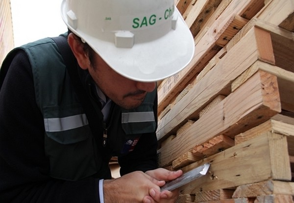 SAG difunde normativa sobre plagas presentes en embalajes de madera