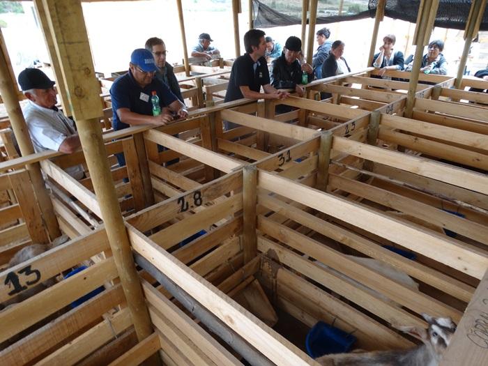 Más de 160 personas se han capacitado en manejo estratégico de ovinos y caprinos en el Huasco
