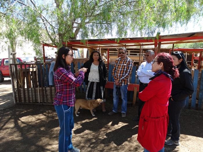 Joven criancera destaca iniciativa de proyecto para manejo estratégico de ovinos y caprinos en la provincia de Huasco