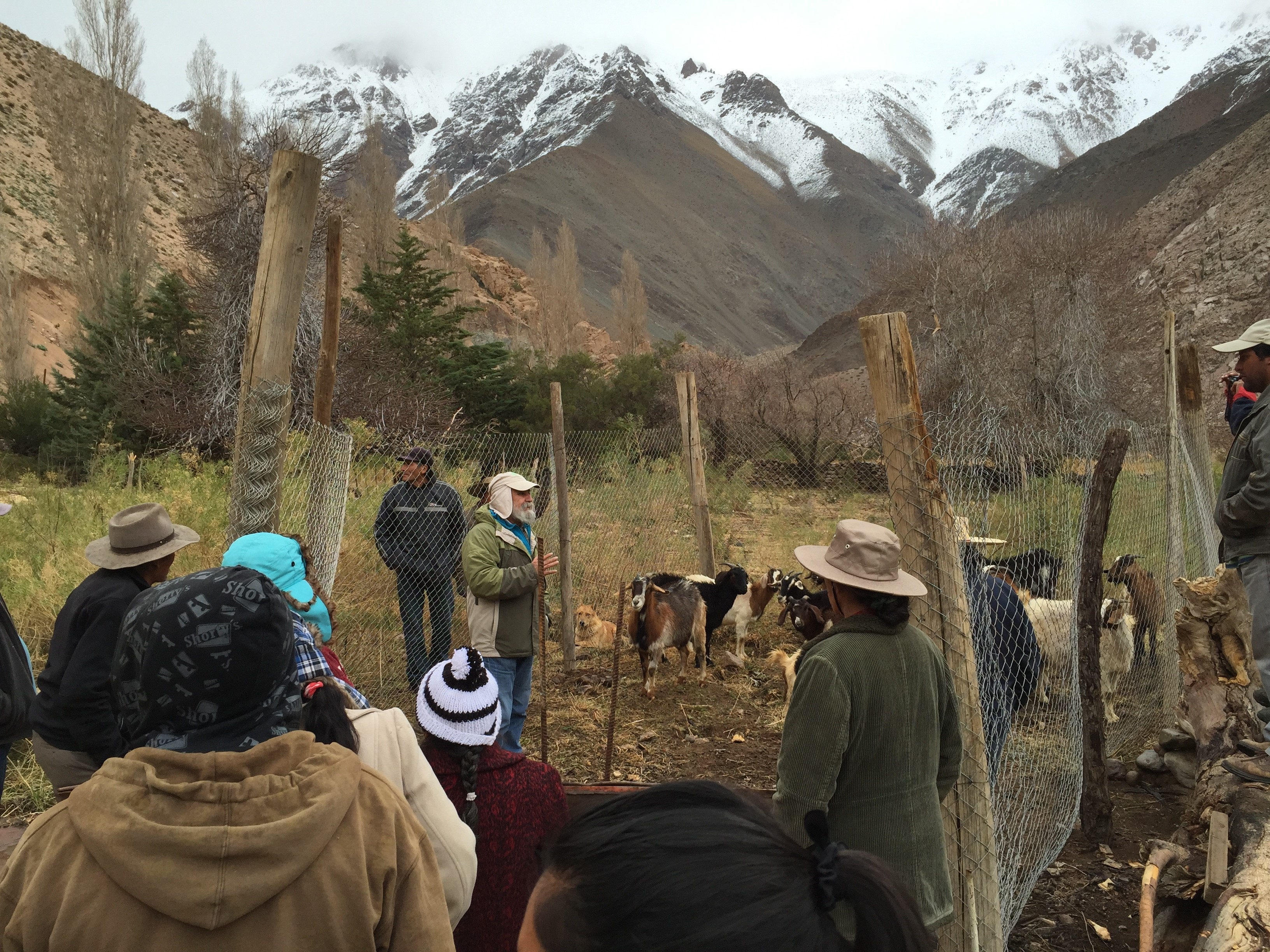 INIA entrega resultados que fortalecen el manejo ovino y caprino en el Huasco