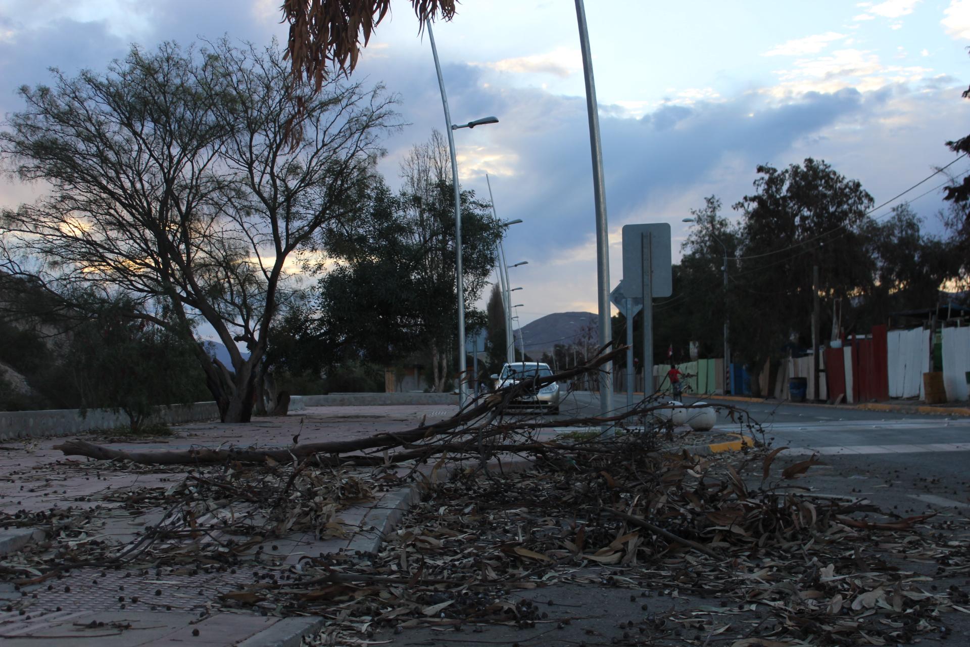 Más de 20 casas con problemas de techumbre, árboles caídos y cortes de luz dejan ráfagas de viento en Vallenar