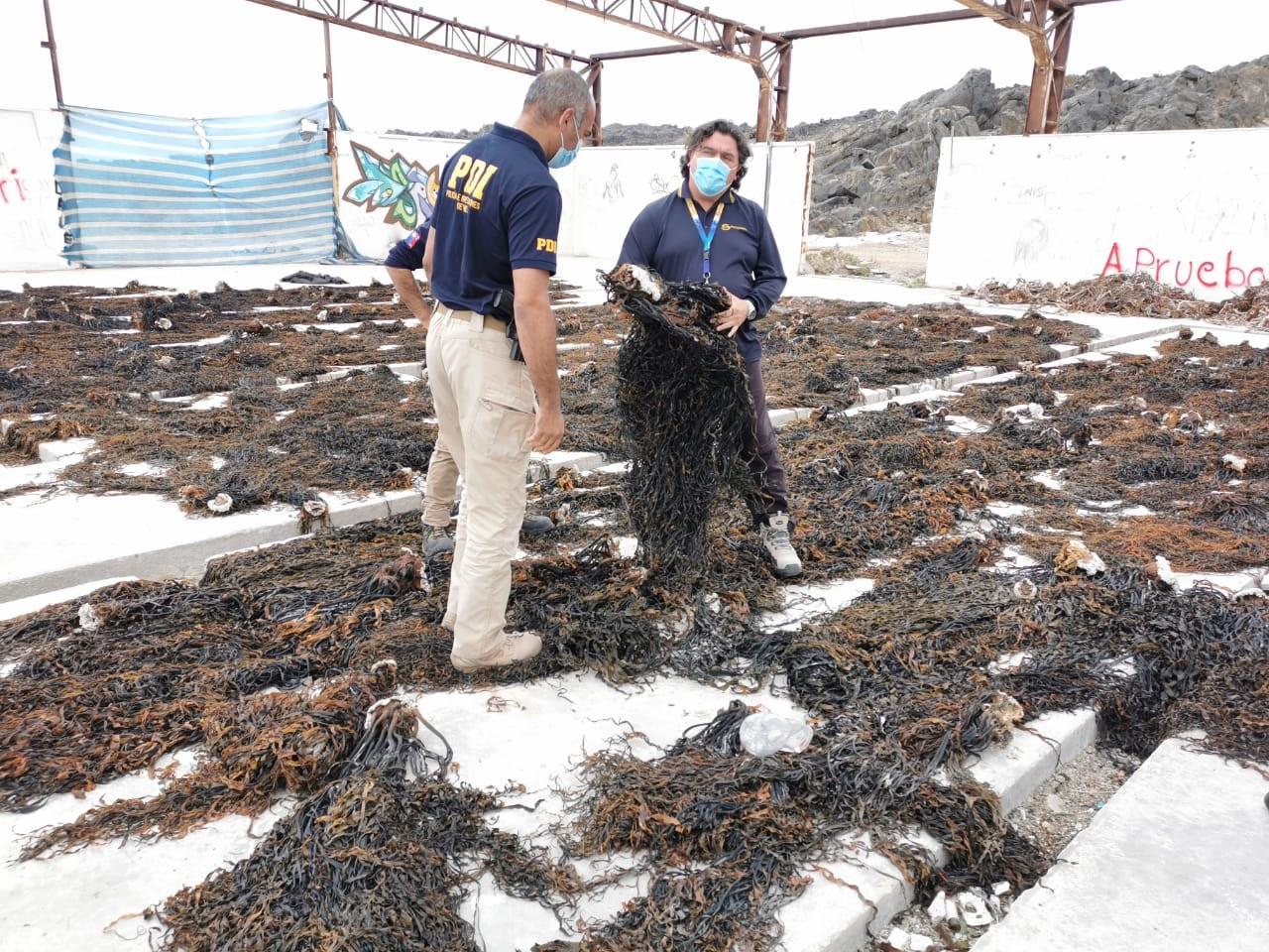 PDI detuvo a cinco personas por infracción a la ley de pesca
