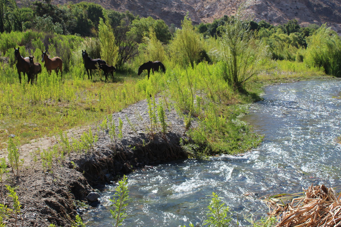 Cores manifiestan firme compromiso por abordar el recurso hídrico de Atacama
